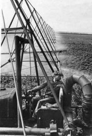 1946 полив овощных культур в совхозе № 1 Кряж