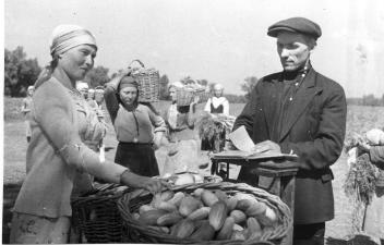 Члены бригады А.Тезиковой сдают в приемном пункте хозяйства урожай овощей, собранный за день.