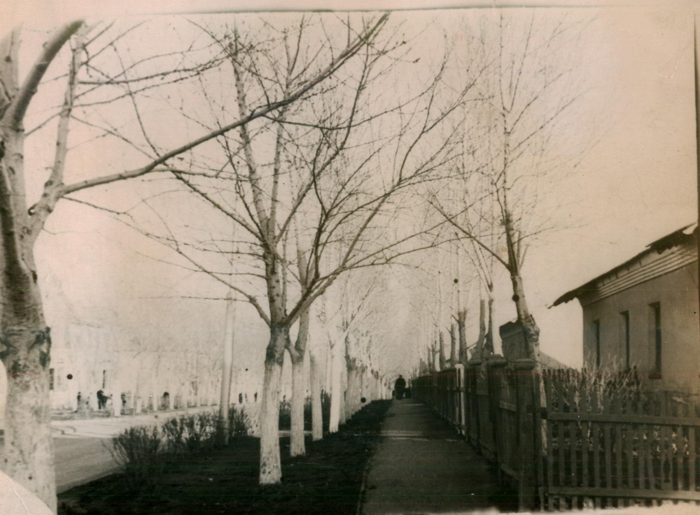 поселок Калиниградский